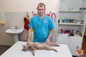 Стерилизация собак и кошек в ветеринарных клиниках